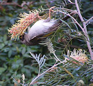 Birdinbush