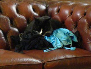 On_laundry