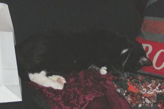 Black_sofa_2