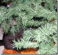 cat_in_tree