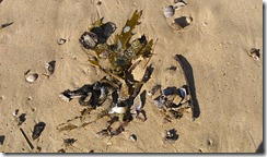 umina_beach